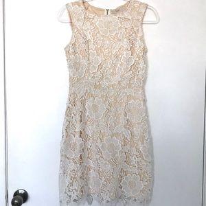 Ann Taylor Loft Cream Lace Shift Dress